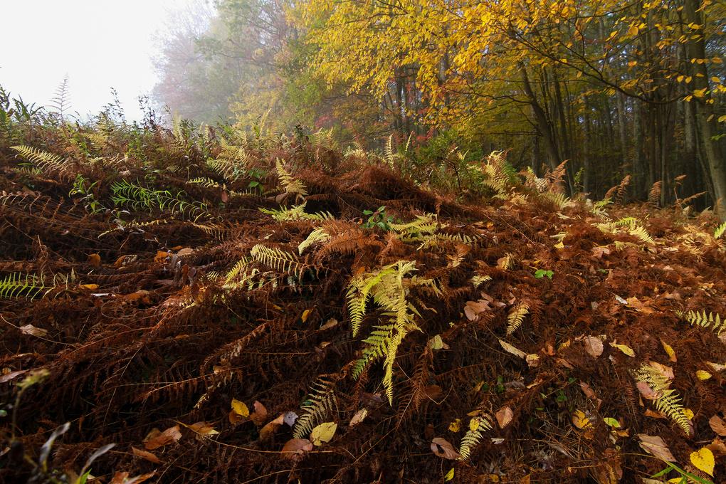Ferns  by Carlin Felder