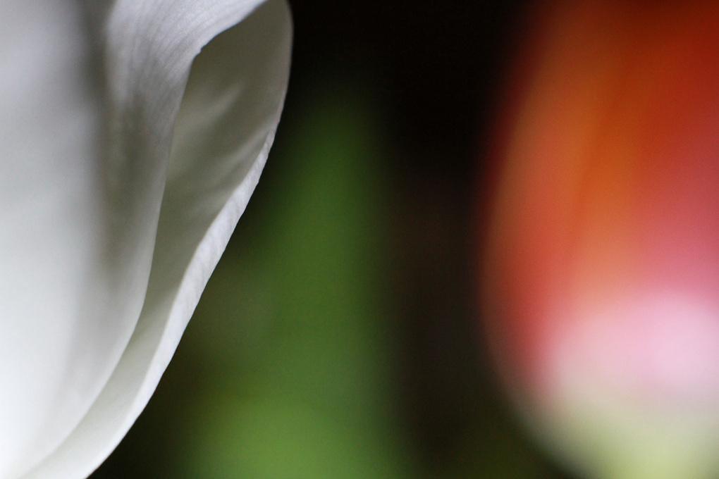 Macro Flowers by Carlin Felder