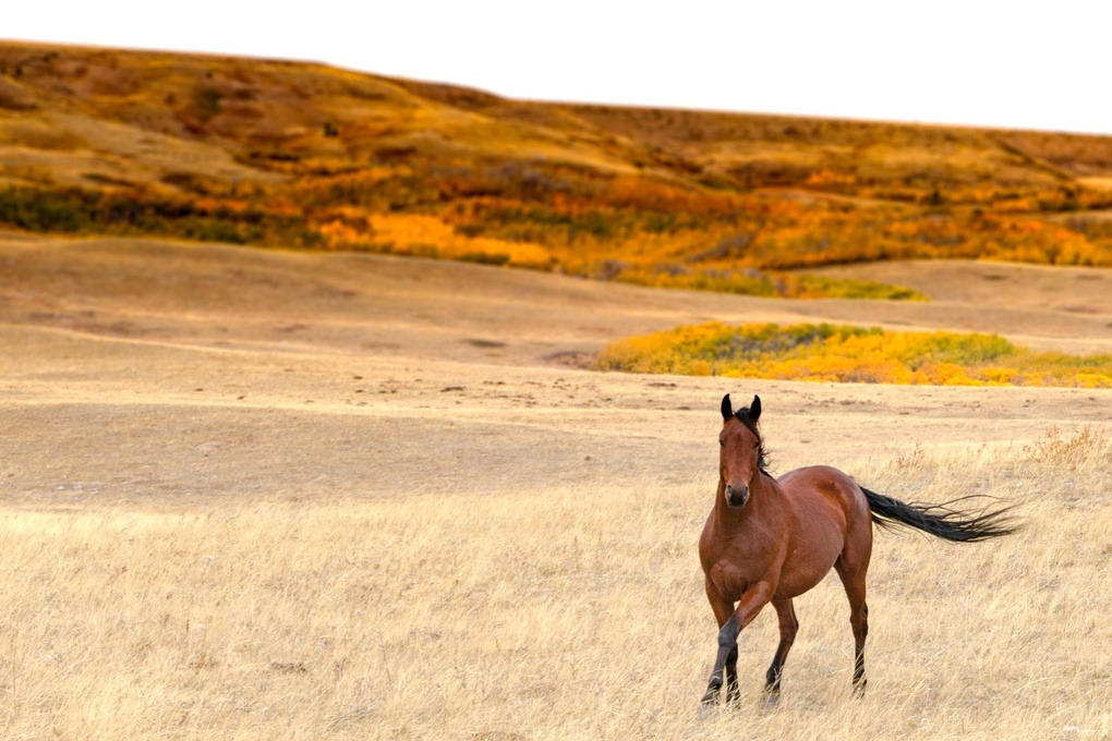 Horse just East of Glacier National Park in Montana by John Zacharyczuk
