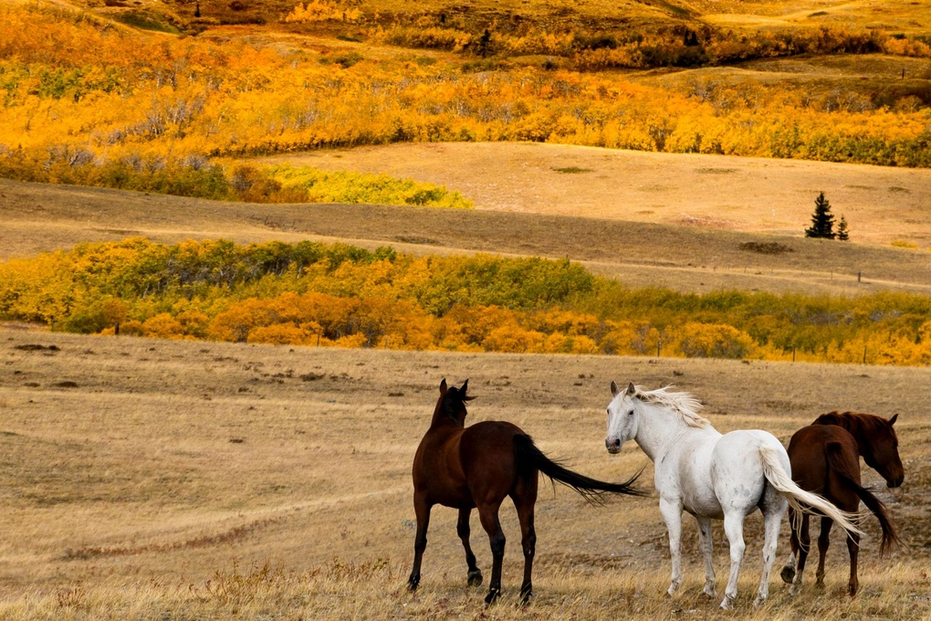 Horses just East of Glacier National Park in Montana by John Zacharyczuk