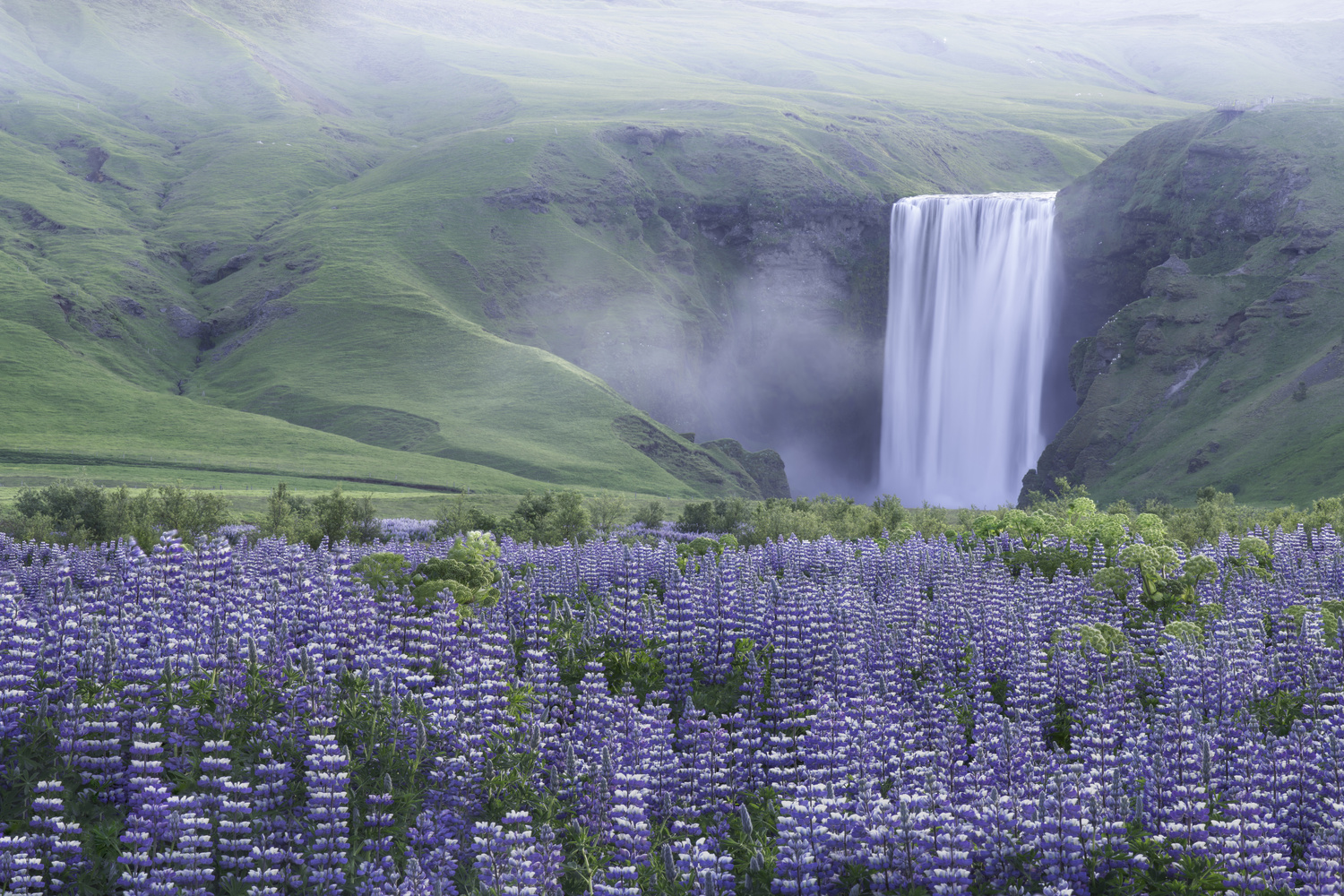 Skogafoss & Lupines by Micah Roemmling