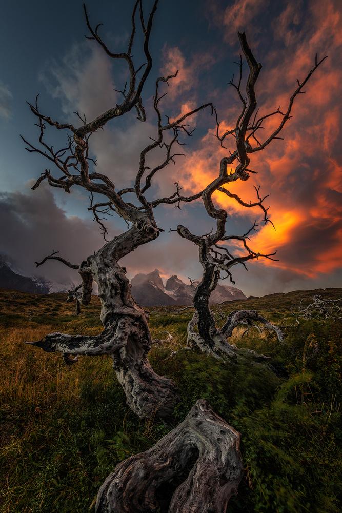 [ … Patagonia ] by Raymond Hoffmann
