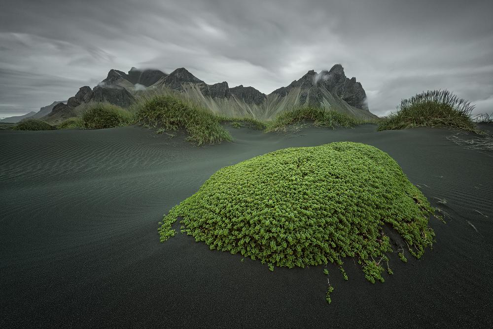 [ … green Island ] by Raymond Hoffmann