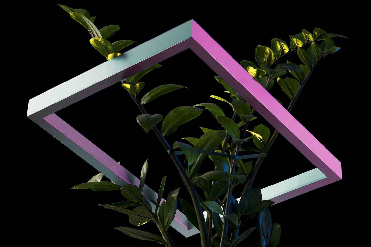 rectangle plant by Ciro Guastamacchia