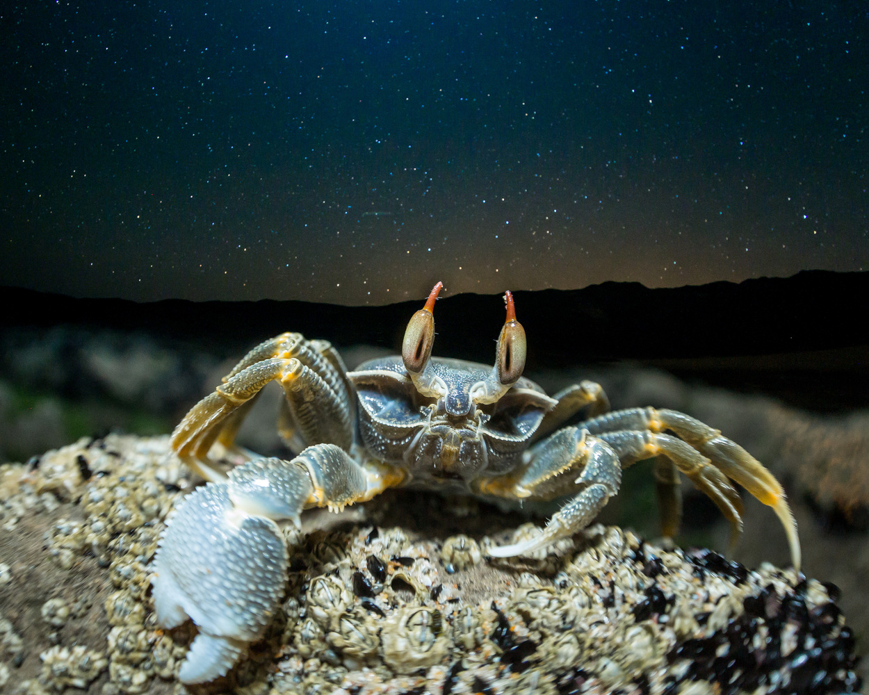 Ghost Crab by Daniel van Duinkerken