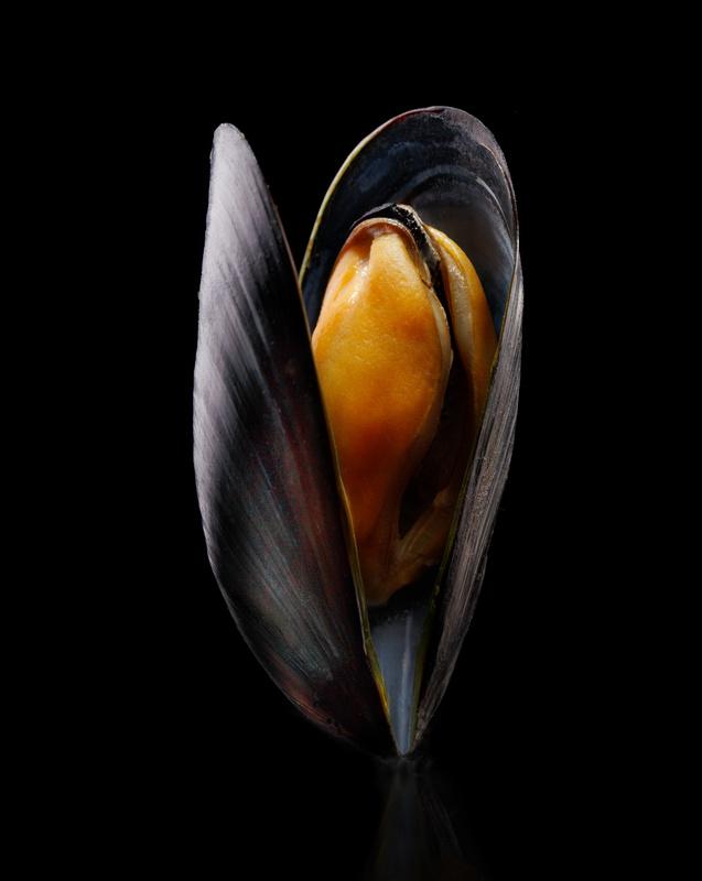 Mussel by Sebastian Colibar