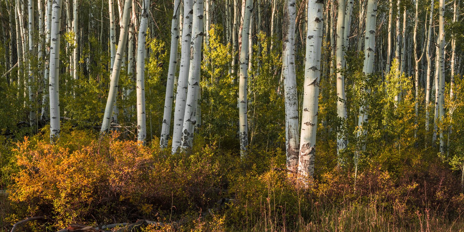 Aspen #1 by Rory Gallagher