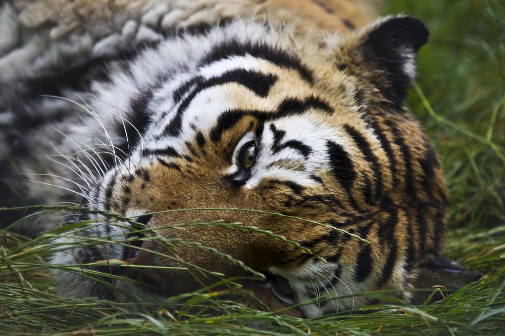 Cat Nap by Daniel Shepherd