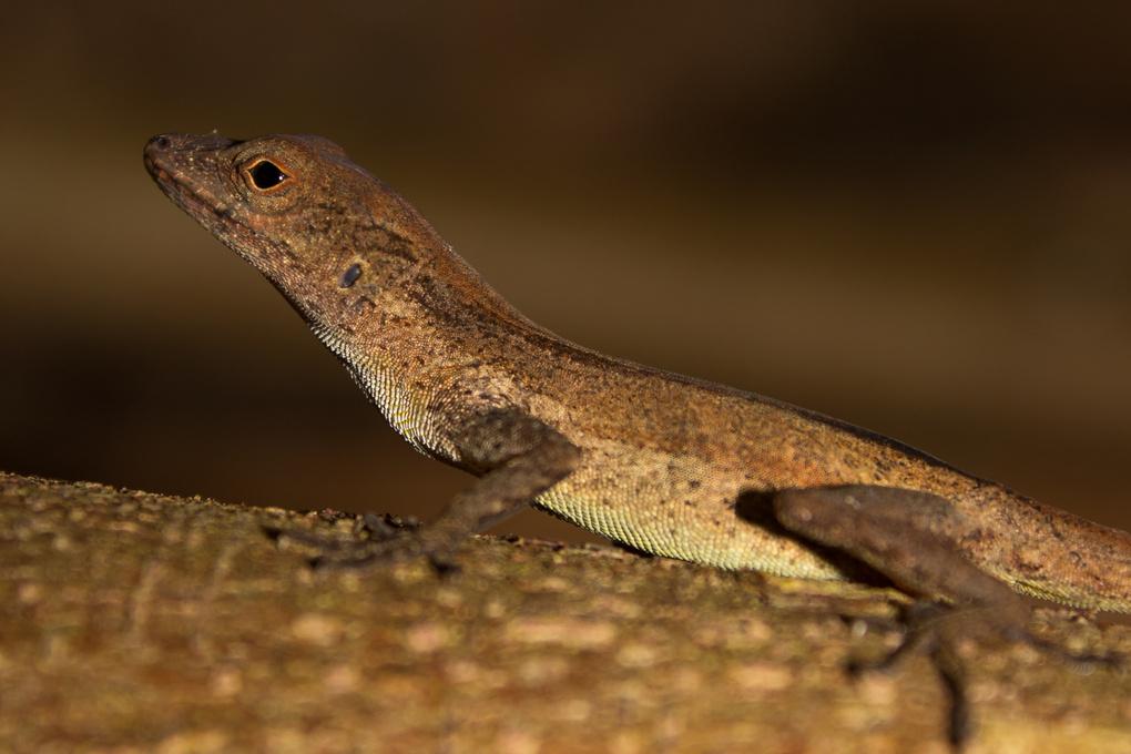 Lizard by Emilio Córdoba