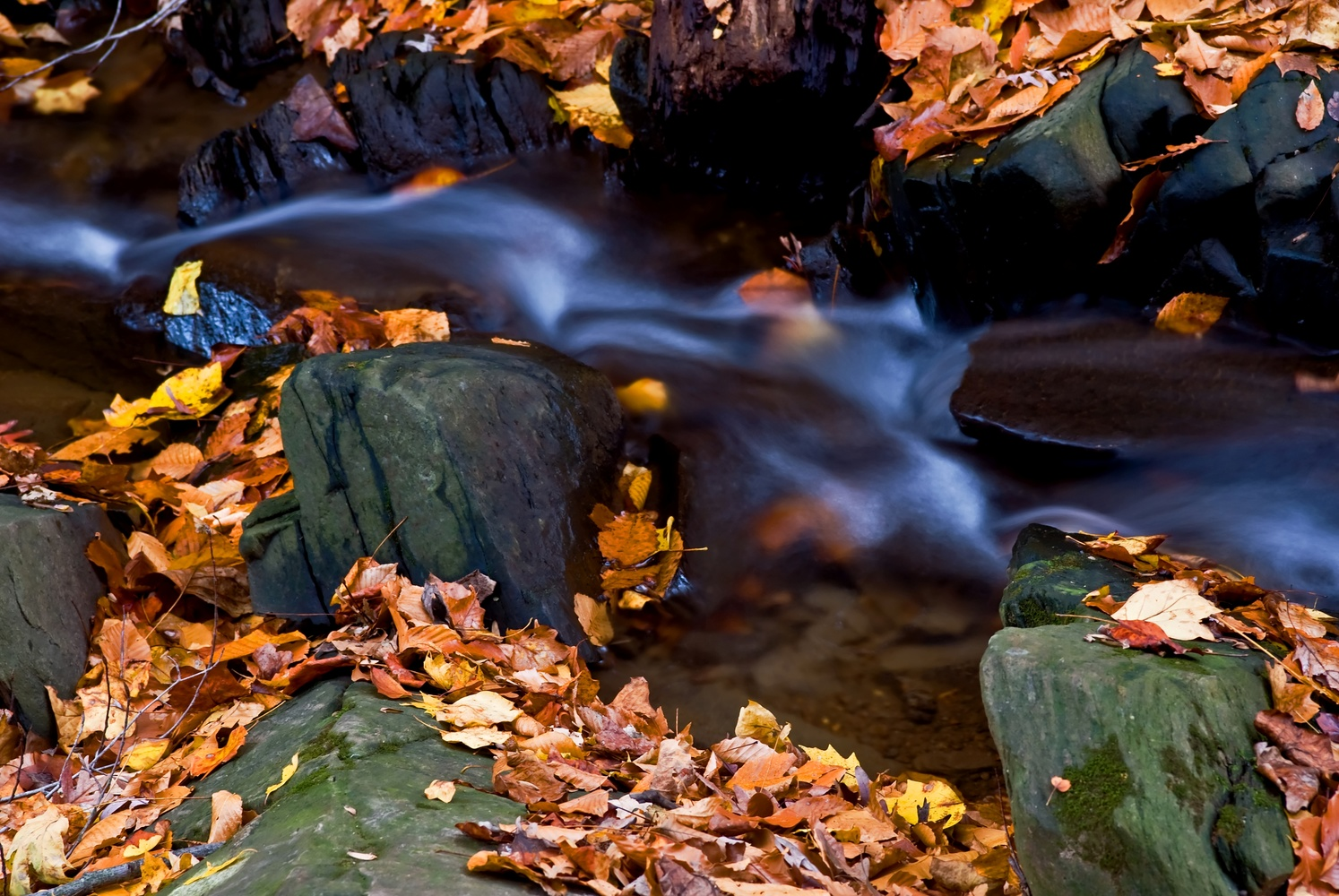 Fall, Rock Creek Park. Washinton, DC by Bill Jonscher