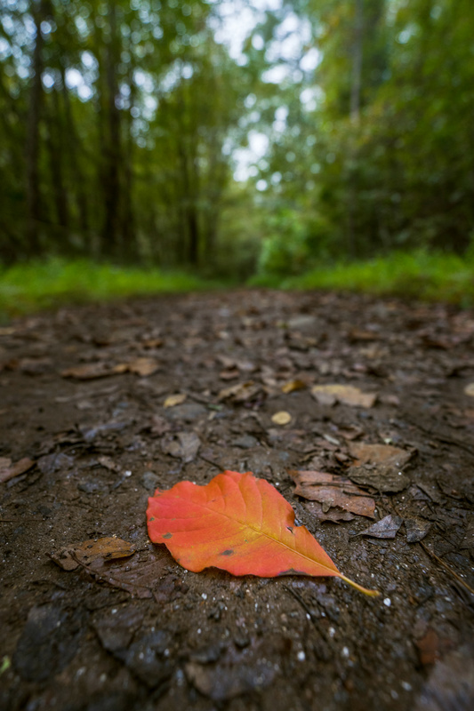All Paths Lead to Autumn by Rob Eakins