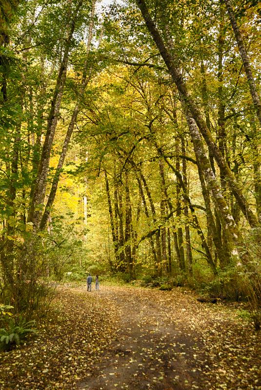 Fall Stroll by Rob Bagshaw