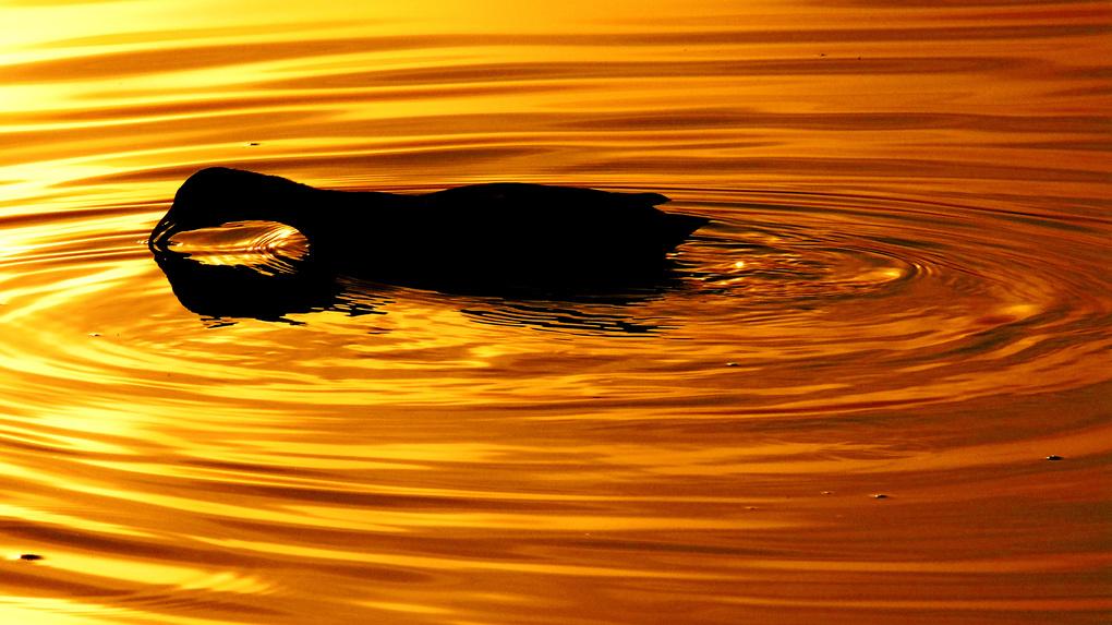 Golden Water by Santhosh Kasturi