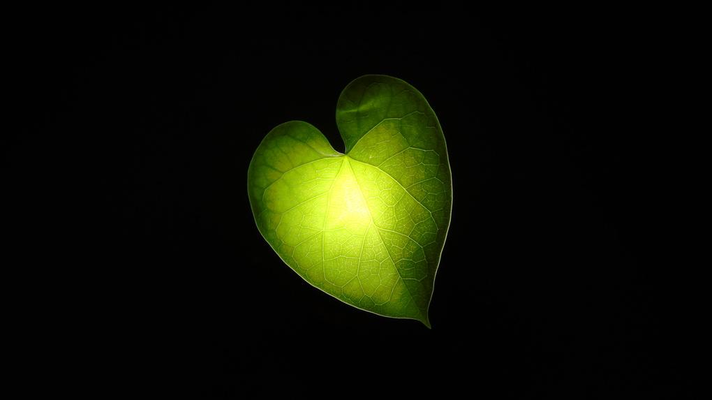 Leaf by Santhosh Kasturi