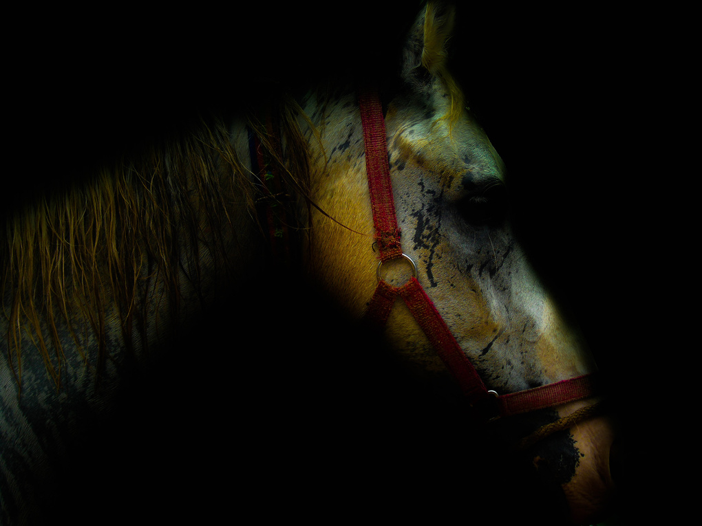 Horse - Like a Tiger pattern by Santhosh Kasturi