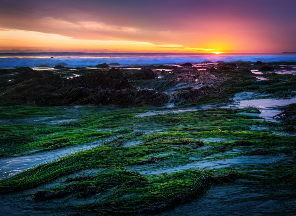 Green Beach by Jordan Stern