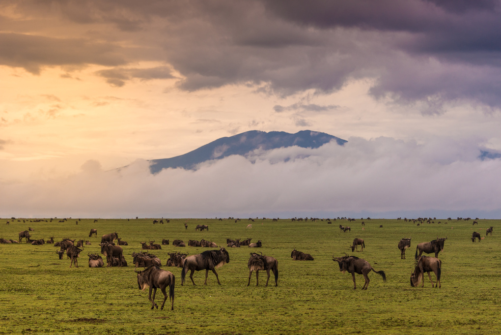 The Great Migration by Onn Henner