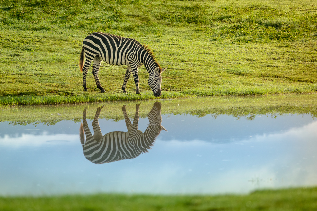 Morning Reflections by Onn Henner