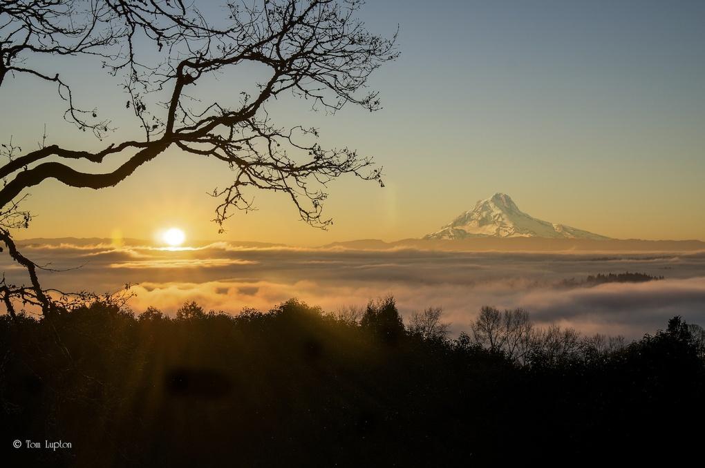 Mt Hood at Sunrise by Tom Lupton