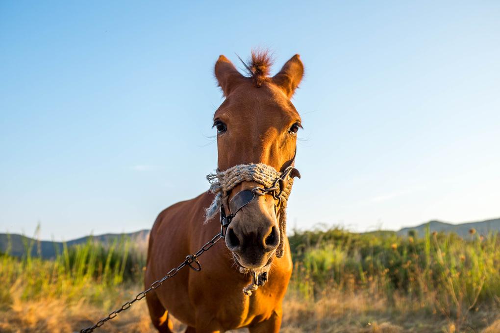 Horse by Andrei Diaconu
