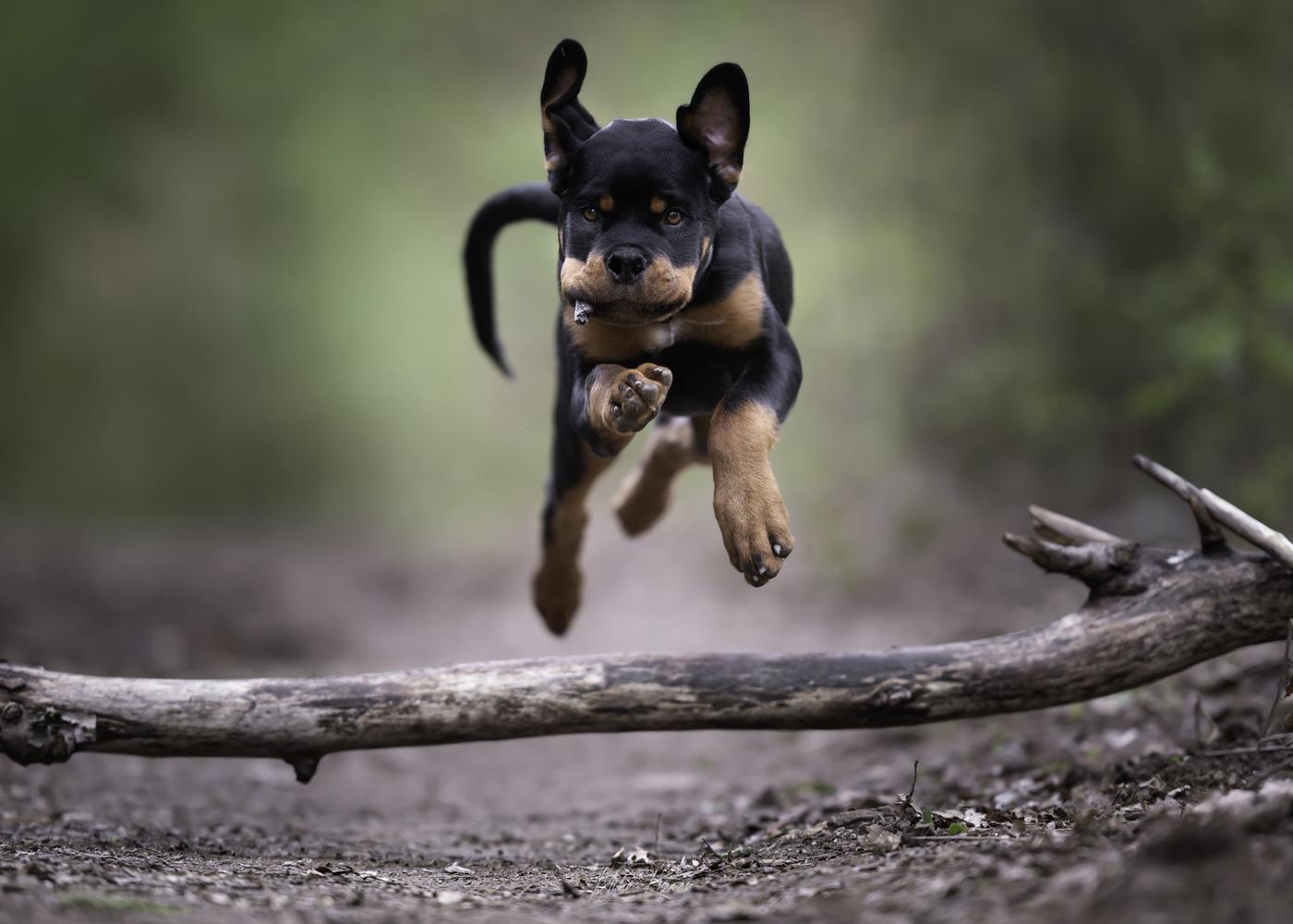 KOWU - cool little puppy by Mike Kremer