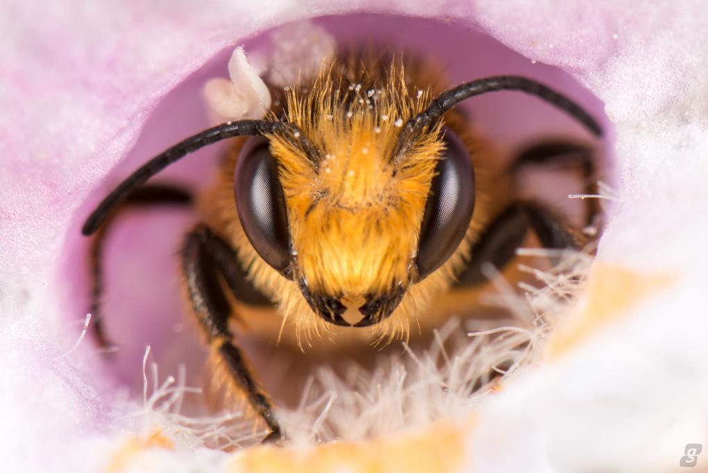 Peek a Bee by Graham Mayers
