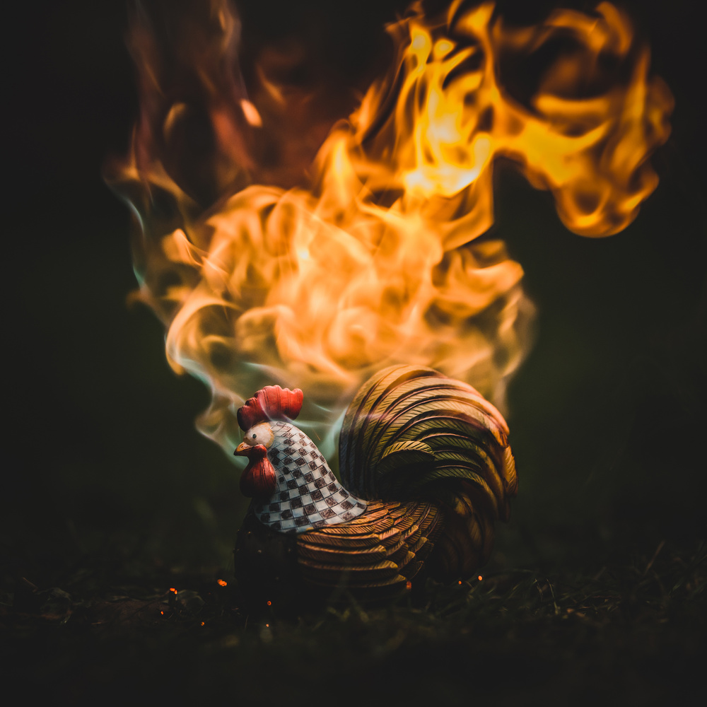 Rooster by Janis Petranis
