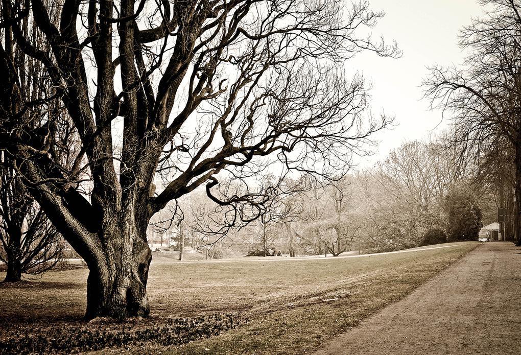 Tree in Bremen by Wille Nyyssönen