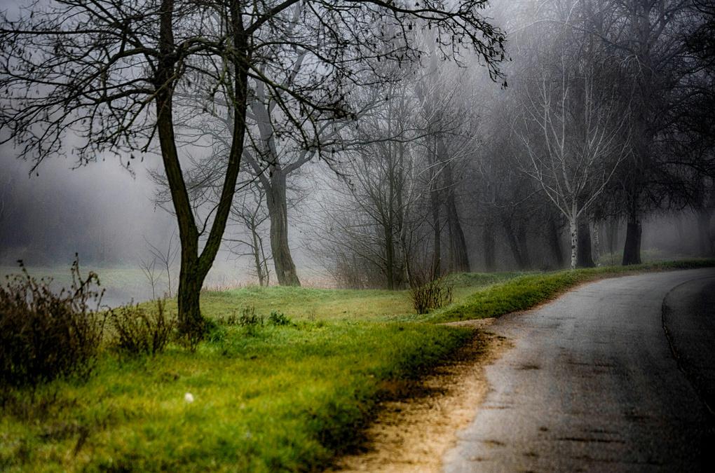 Misty trees by Peter Schmid