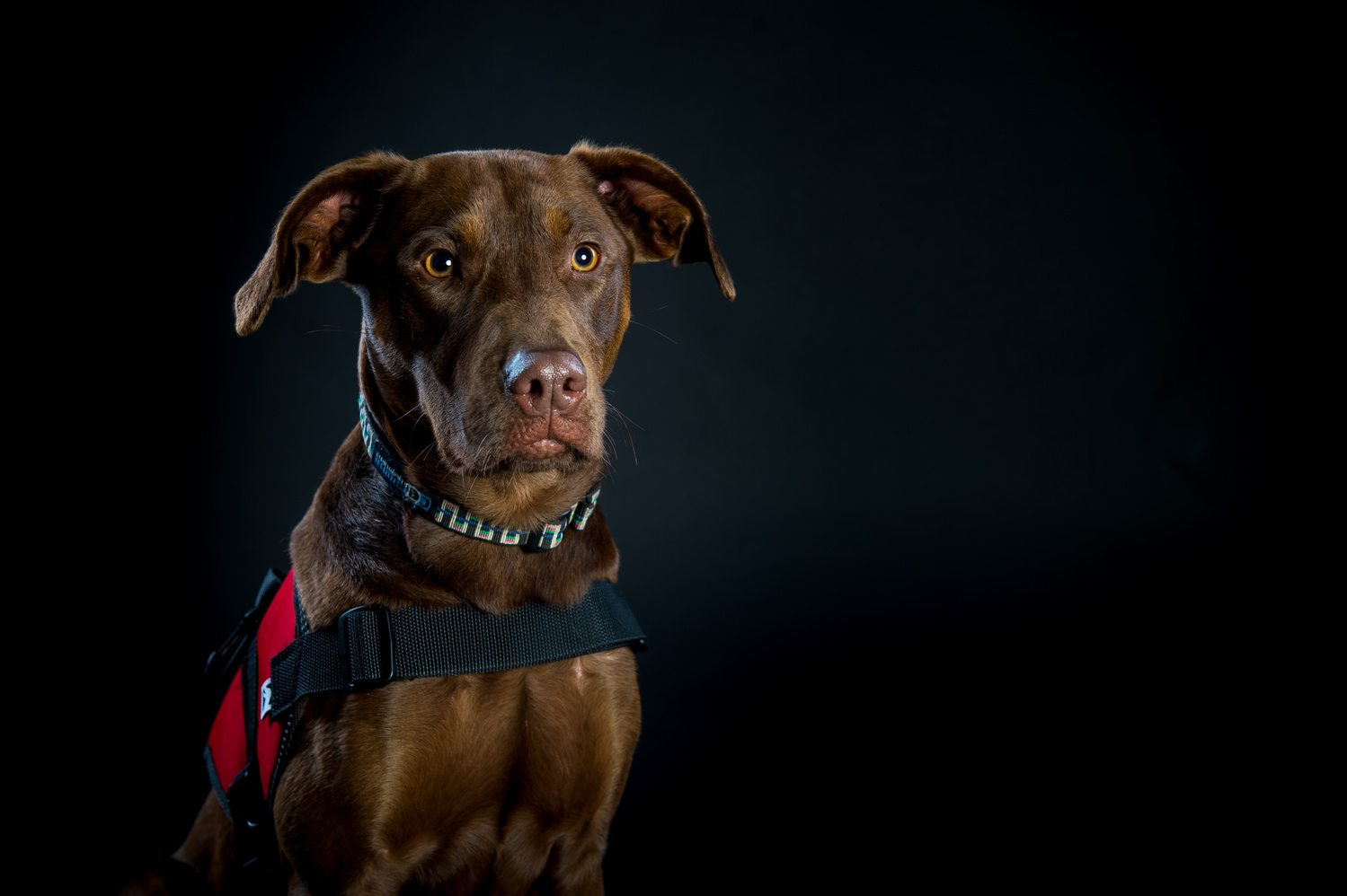 Service Dogs for America by Darren L