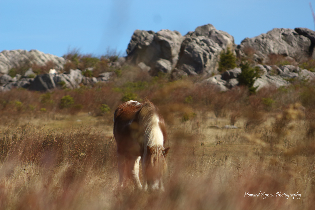 Wild Ponies by howard agnew
