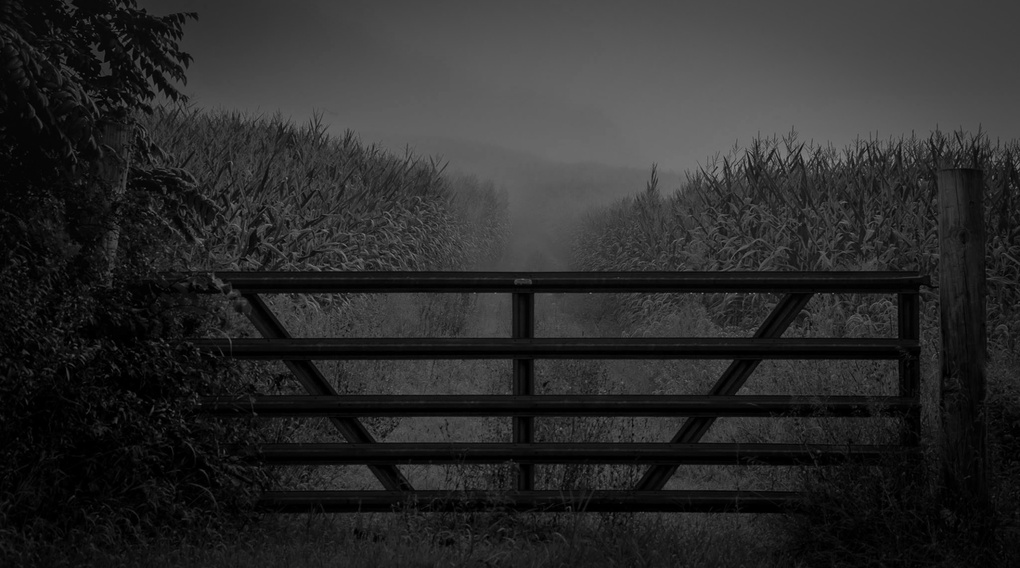 Mist by Chris Walch