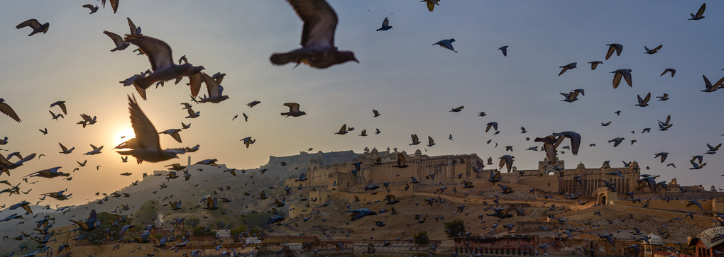 Amer Palace by Dalbir Virdee