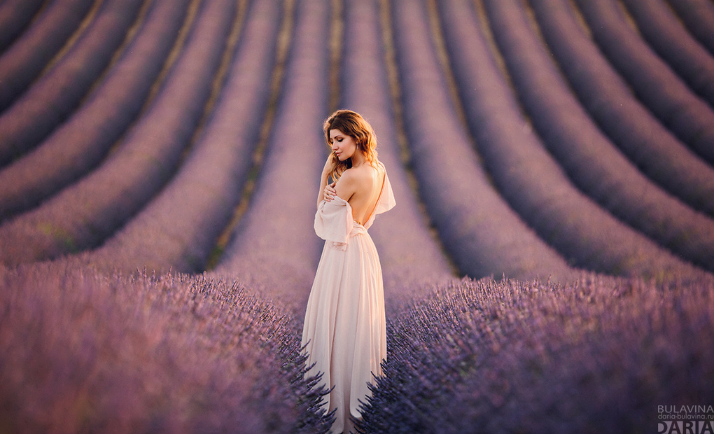 Lavander Dreams by Daria Bulavina
