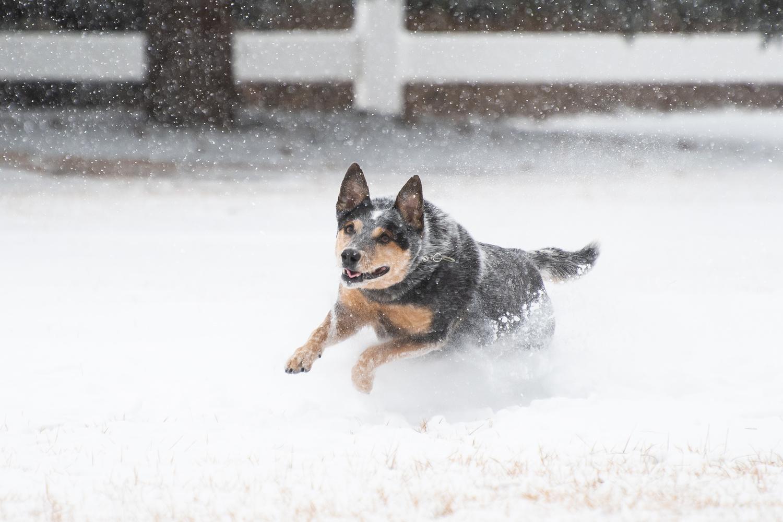 Snow Daze by Rick Wieseler