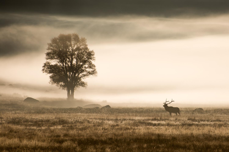 Daybreak by Rick Austin