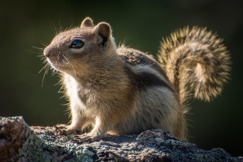 Sun Squirrel by Rick Wieseler