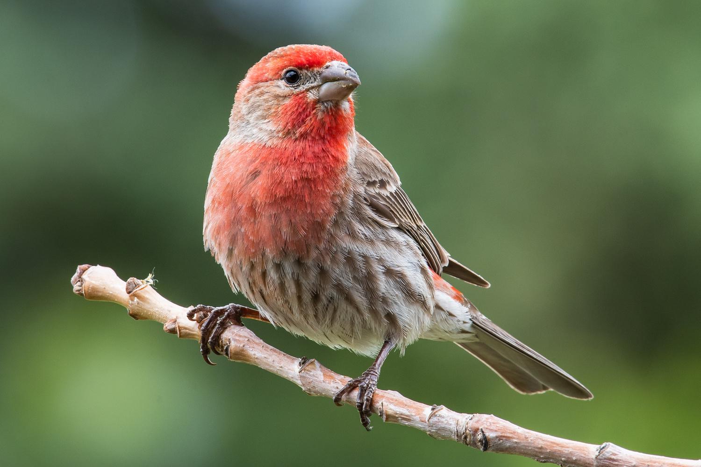 The Finch by Rick Wieseler