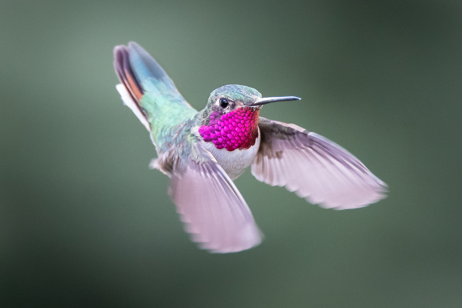 Hover Time by Rick Wieseler