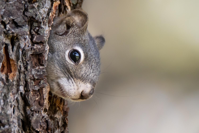 Secret Squirrel by Rick Wieseler