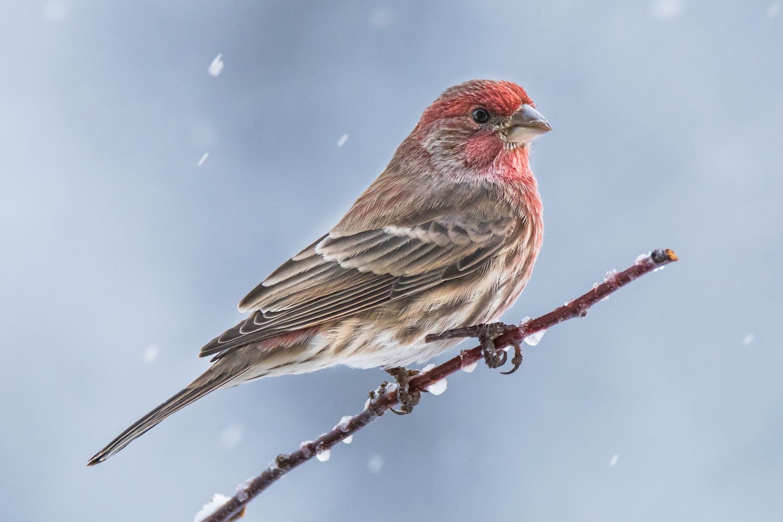 Winter Nears by Rick Wieseler