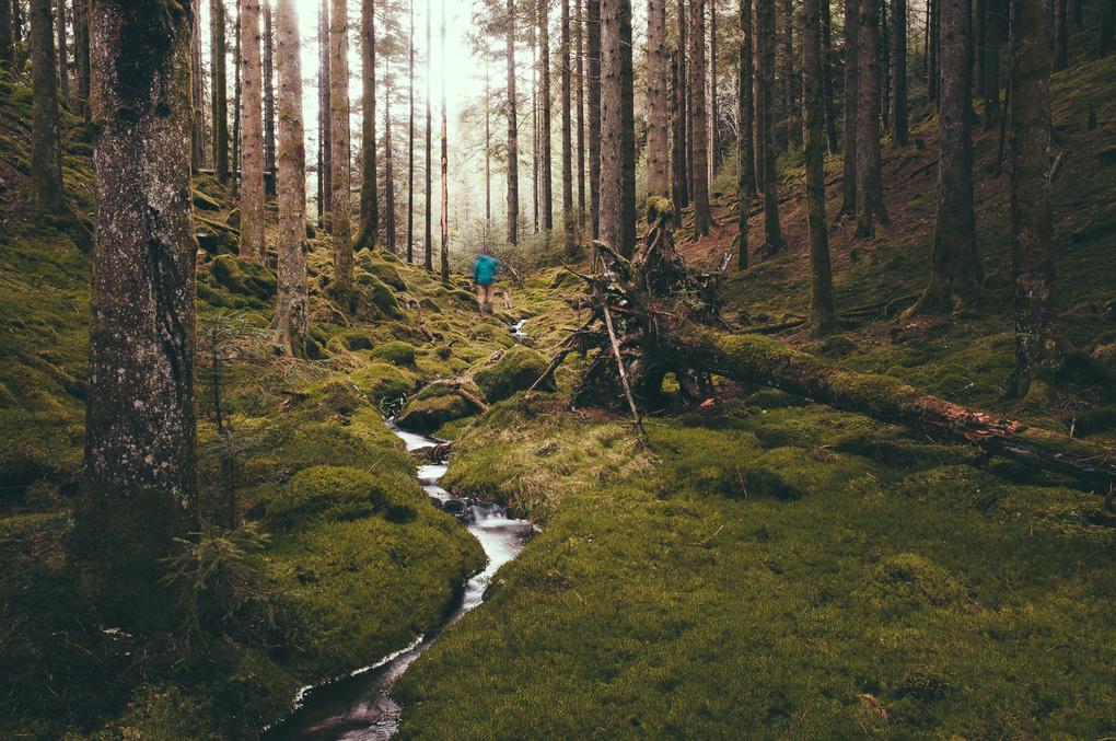 Forest Walk by Craig Bunyan