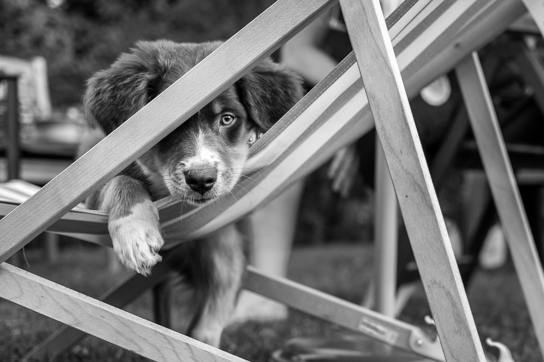 Puppy in a deck-chair by Dennis Abel