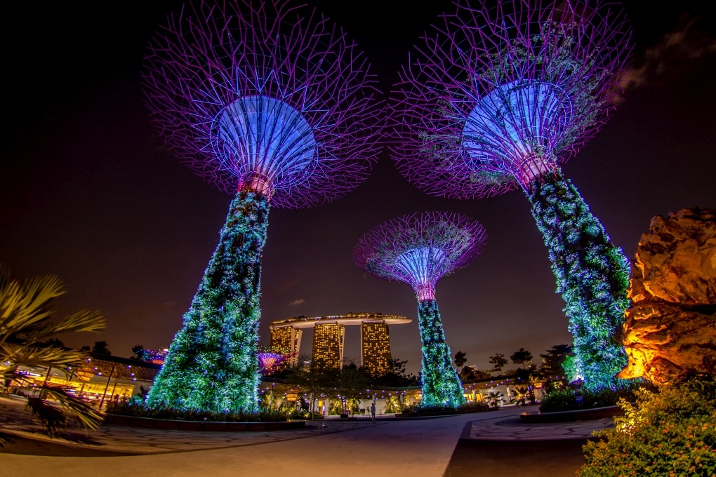 Under the Supertrees by Dennis Abel