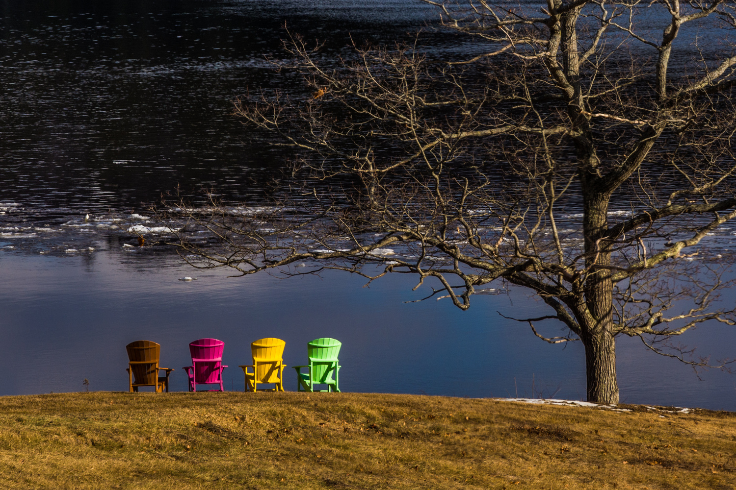 Mid-Winter Colors by Nelson Jewell