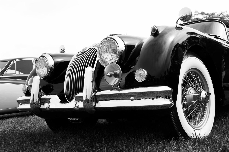 Jaguar by Scott Seroka