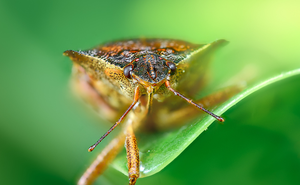 a bug by Marco Gressler