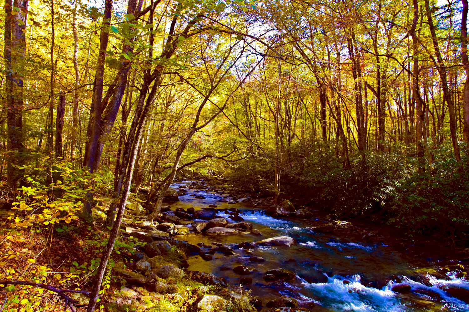 Fall in the Smokies by EL PIC