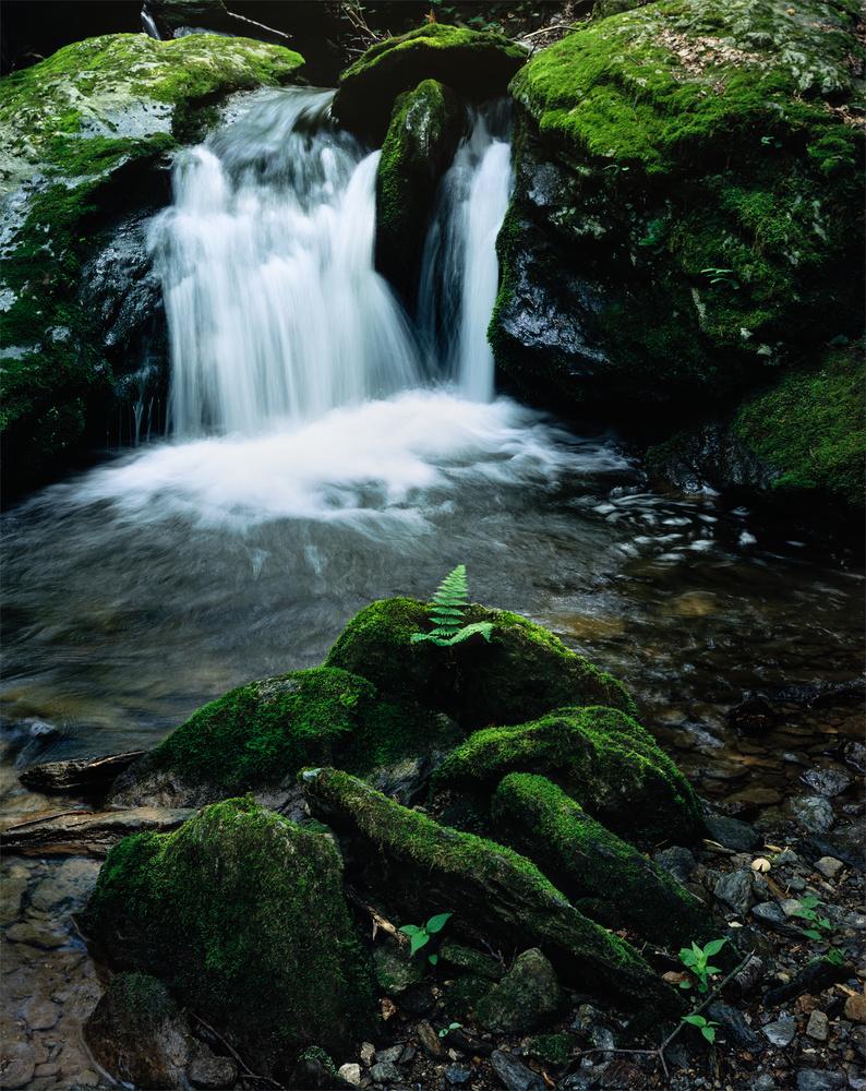 Fern and Waterfall by Dan McCloud