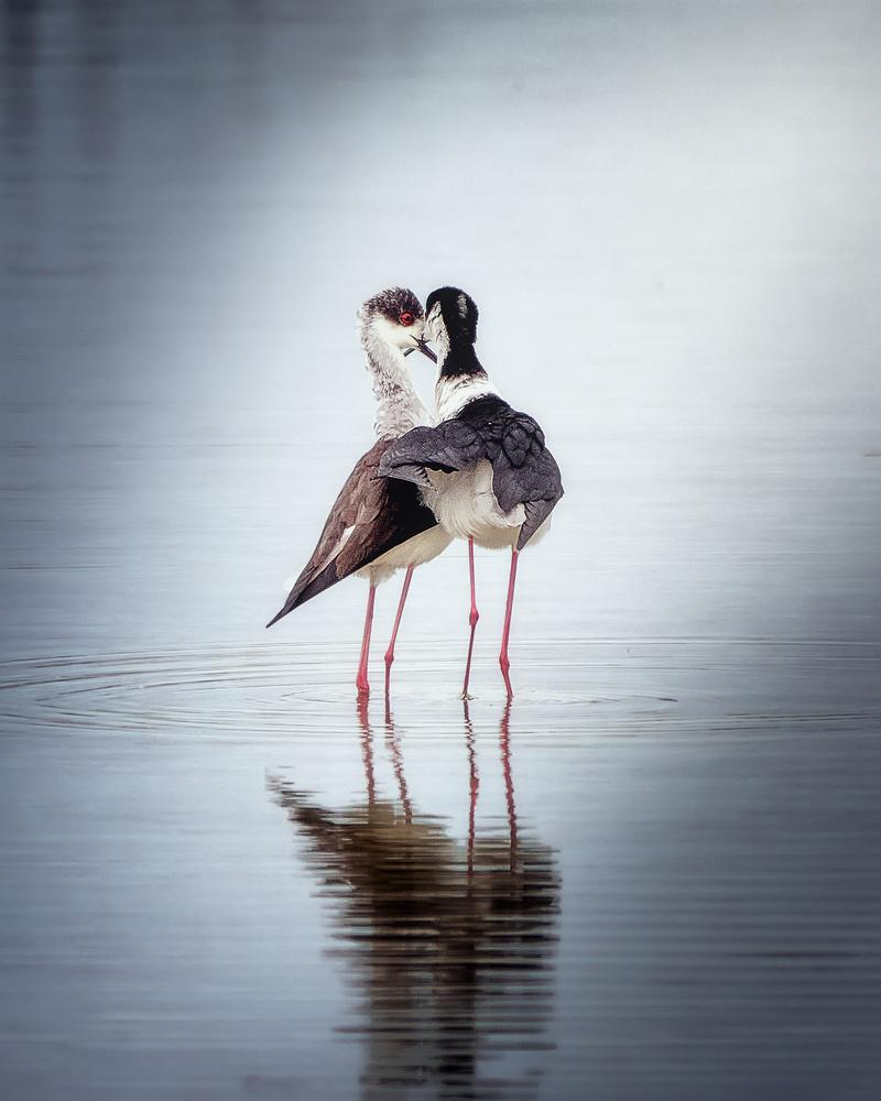 In love by Ricardo Gayan